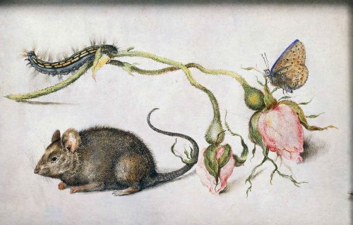 <em>MOUSE WITH ROSES, A CATERPILLAR AND A BUTTERFLY</em><BR>JAN BRUEGHEL THE ELDER
