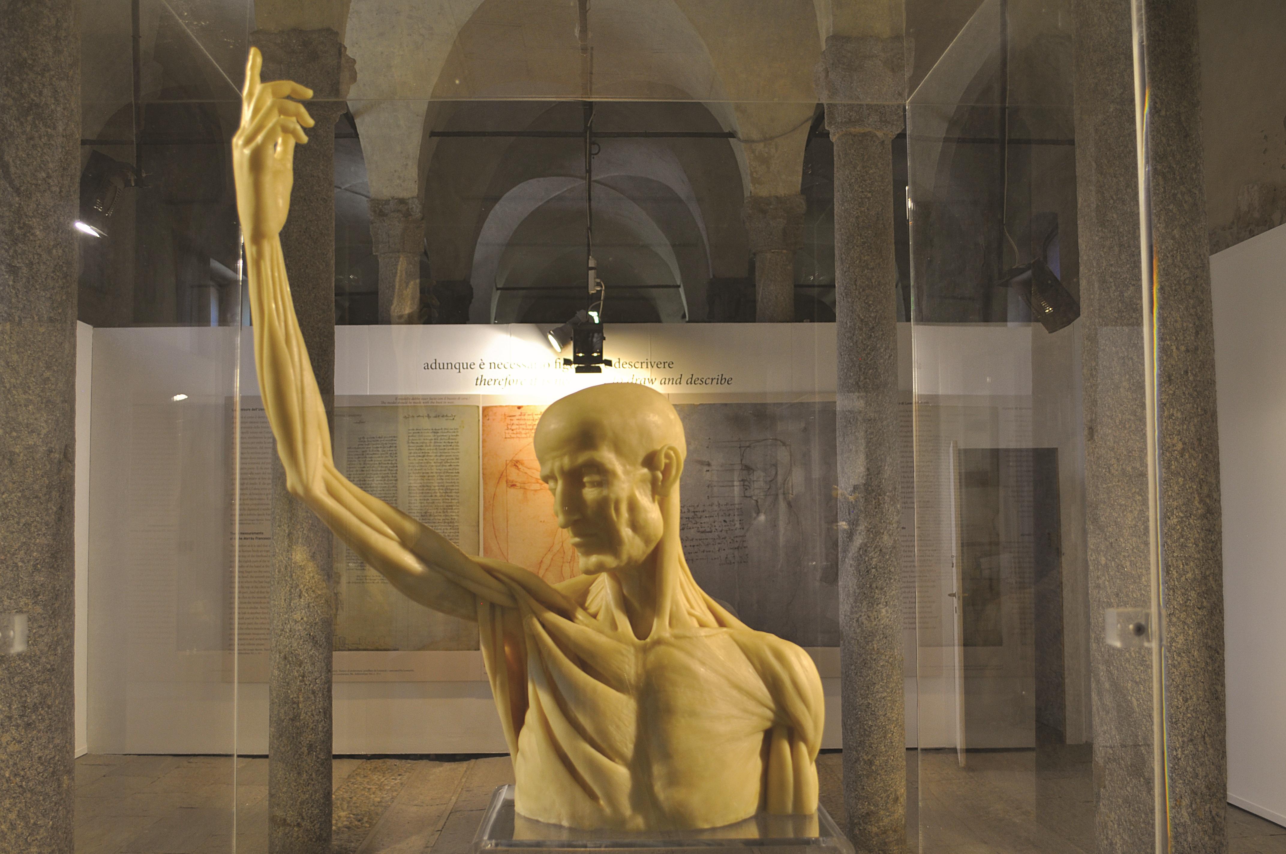 <p>Ceroplastica, busto con braccio alzato; ideazione Paola Salvi, realizzazione Moreno Vezzoli</p>