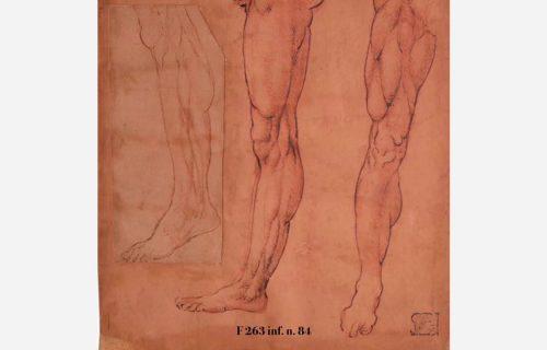 I DISEGNI DELL'AMBROSIANA<BR><em>Studio anatomico di gambe</em>, Leonardo da Vinci